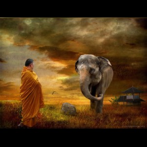 a monk and an elephant
