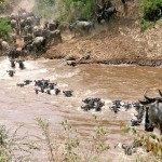 The Mystery of Animal Migration