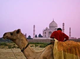 Camel in front of the Taj Mahal