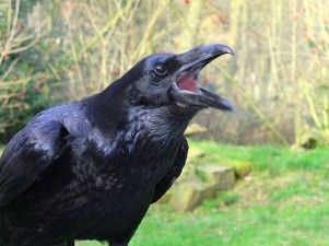 The Symbolism of the Raven