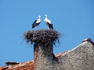 Chimney-with-stork-nest