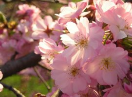 Haiku: Abundance in Brevity