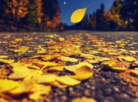 fall, philosophy